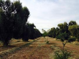 terreno erba 2